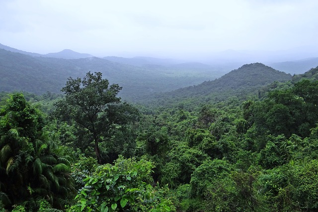 Broad rainforest view