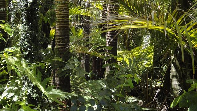Dense forest vegetation