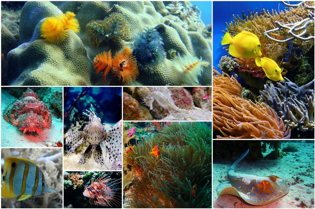 Various fish & coral collage