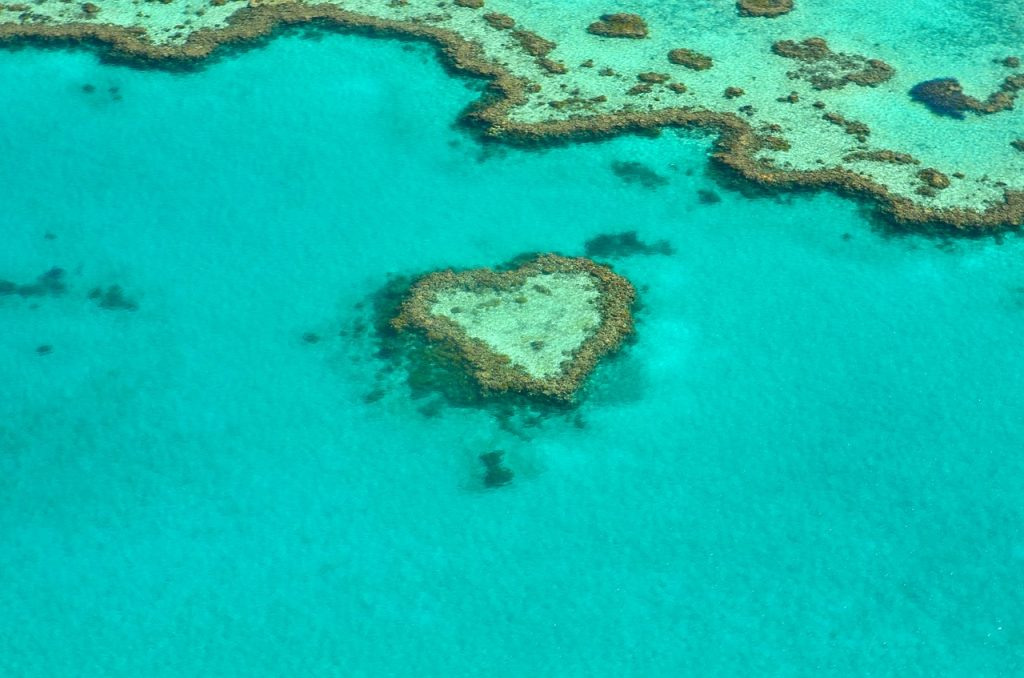 Great Barrier Reef heart coral