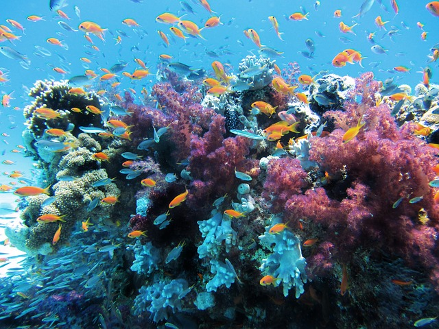 Colorful coral reef & fish